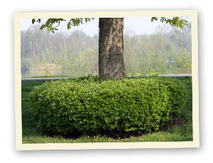 waldbeet und waldgarten pflanzen beete unter b umen. Black Bedroom Furniture Sets. Home Design Ideas