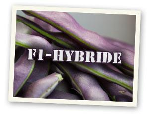 F1-Hybride