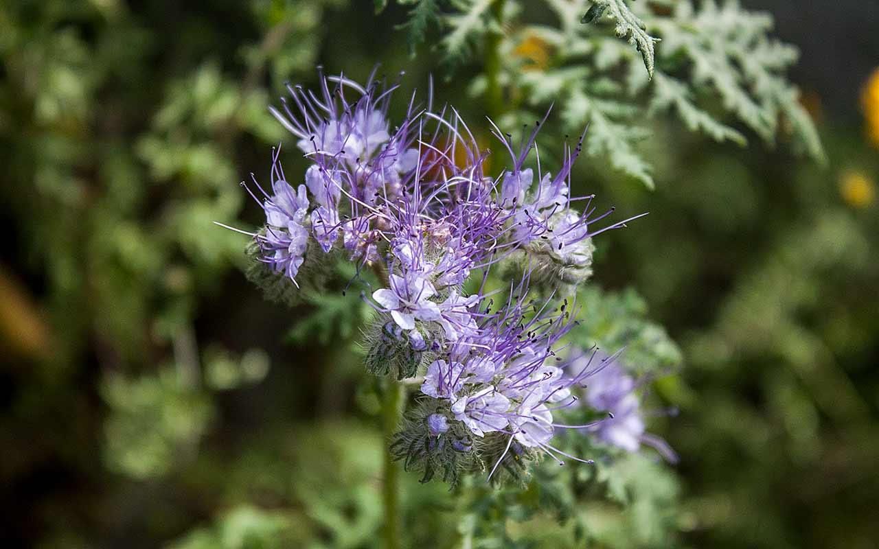 Gründüngung – die natürliche Bodenkur