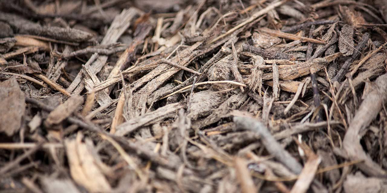 Wie macht man den Boden sauer? – Natürlich ohne Torf