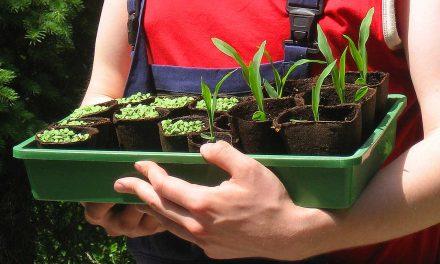 Klimaschonend im Garten – 10 Tipps für nachhaltiges Gärtnern