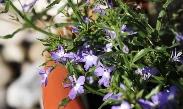 Der bienenfreundliche Blumenkasten