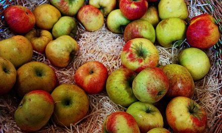 Lagerung der Apfelernte (Sommer-, Herbst- und Winteräpfel)