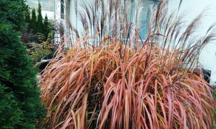 Herbstputz im Garten – nicht alles schneiden