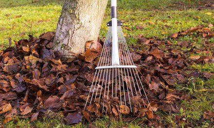 Wertvolles Herbstlaub – Dünger, Wintermantel und Behausung
