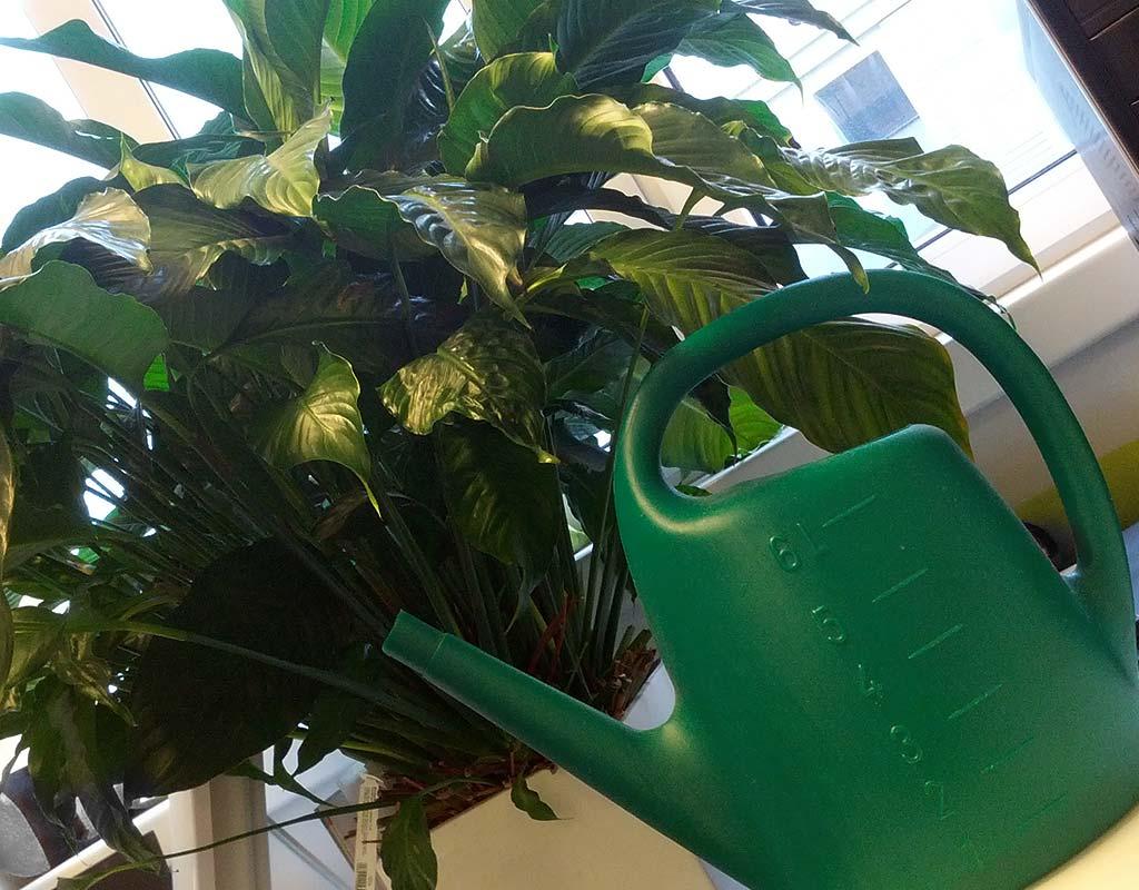 Harte Winterzeit für Zimmerpflanzen