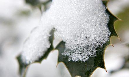 Winter-Garten-Impressionen 2010