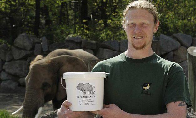 """""""Elefantenglück"""" in den Medien – Ein E-Mail vom Zoo"""