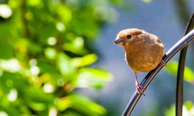 Vögel in den Garten locken – Der Garten als Vogelparadies