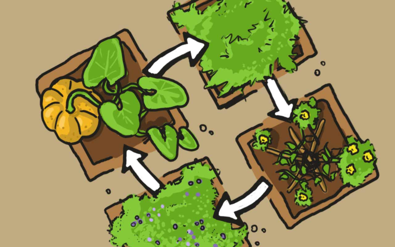 Beet-Zyklus durch Fruchtfolge (Fruchtwechsel)