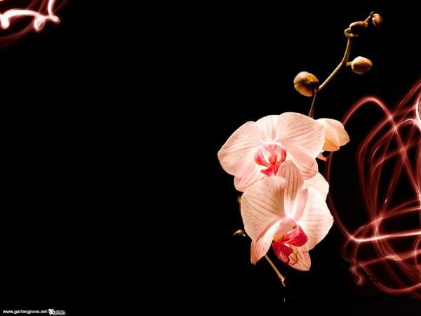 Wallpaper orchidee steine  Garten - Hintergrundbilder (Wallpaper) zum Herunterladen