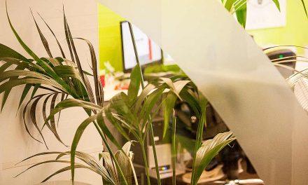 Büro-Pflanzen für ein gesünderes Arbeitsklima