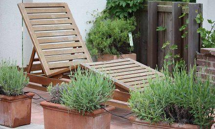 Zimmerpflanzen, Balkon, Terrasse und Garten fit für den Urlaub