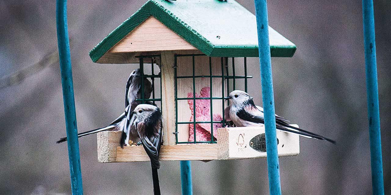 Vögel (Wildvögel bzw. Singvögel) im Winter richtig füttern