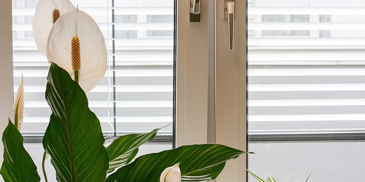 Die richtige Luftfeuchte in Wohnräumen für Menschen, Tiere und Pflanzen