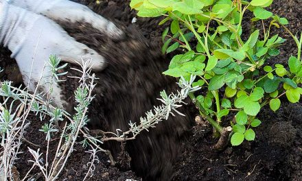 Guano, Torf & Co: Auch BIO-Erde kann die Umwelt gefährden!