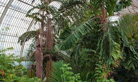 Der GartenGnom in den Kew Gardens