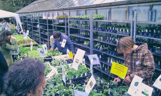 Das war die 10. Pflanzen-Raritätenbörse in Wien (2011)
