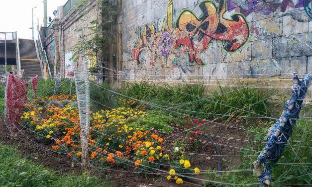 Guerilla Gardening – Stiller Protest und grüne Verschönerung