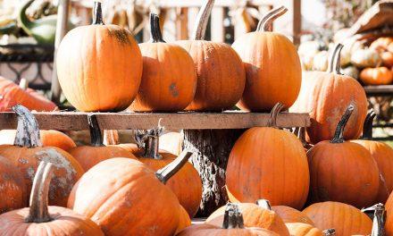 Herbstzeit ist Kürbiszeit