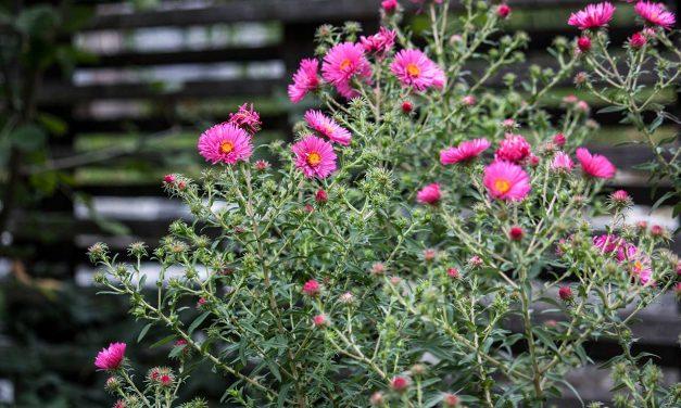 Der Garten im Herbst: herbstliche Farbenpracht