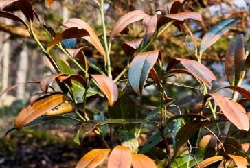 Pflanzen im Kältestress – Frostschäden im Garten
