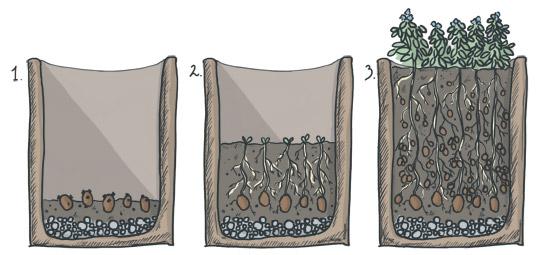 erd pfel kartoffeln kann man nahezu berall anbauen. Black Bedroom Furniture Sets. Home Design Ideas