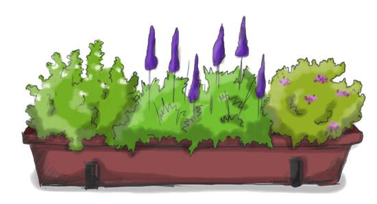 Balkonkasten mit Zitronentymian, Lavendel und Oregano
