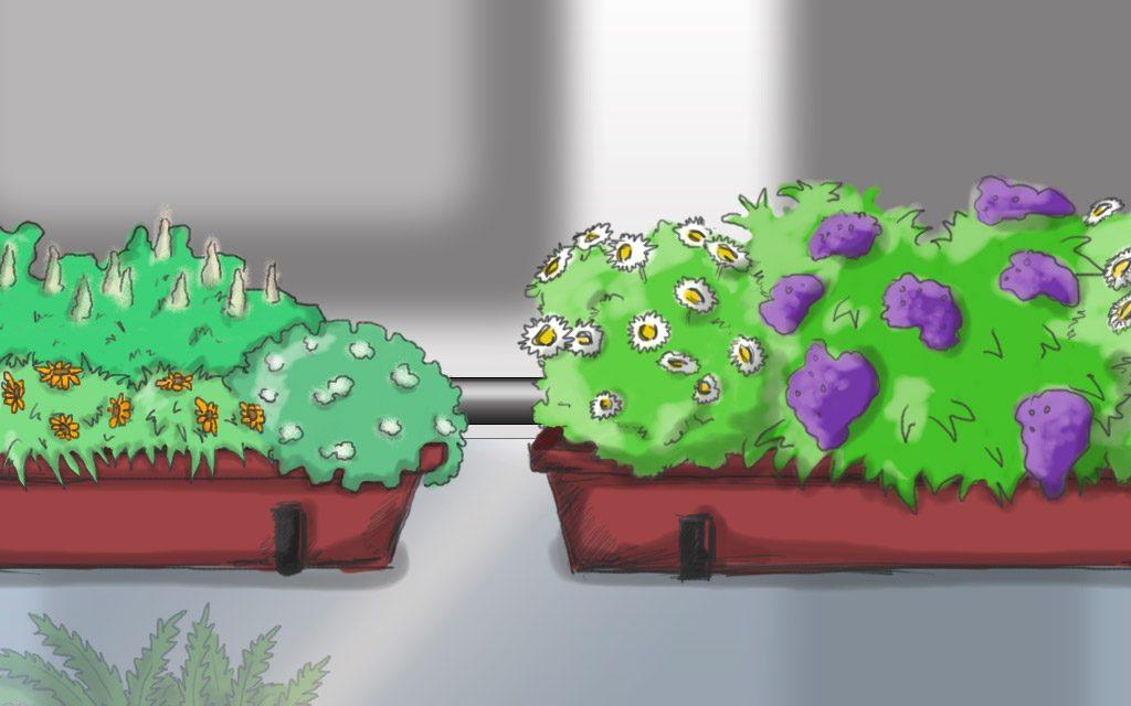 Pflanzpläne: 5 Blumenkästen für den sonnigen Balkon