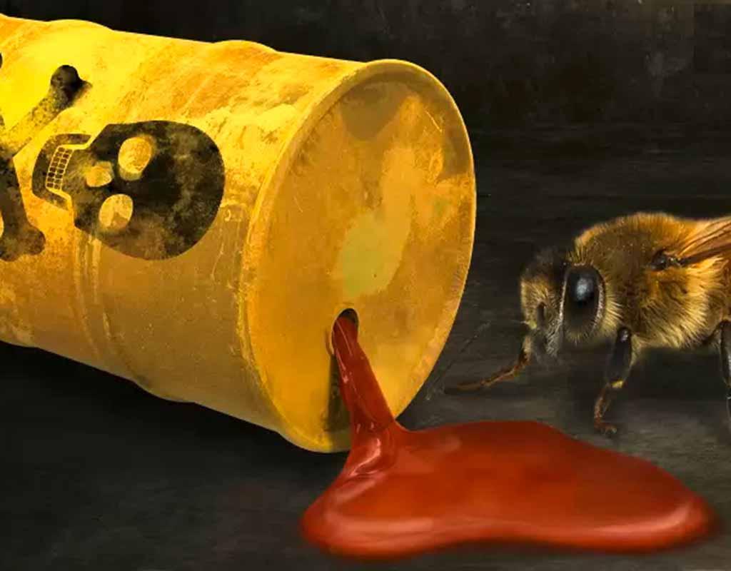 Greenpeace-Kampagne und Petition für den Schutz der Bienen