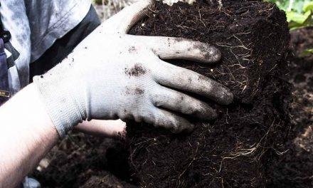 Gartenarbeiten im April
