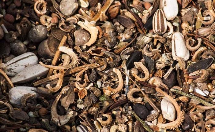 Saatgut- und Sorten-Vielfalt in Gefahr: Die neue EU-Saatgutverordnung