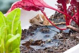 Staunässe: 5 Tipps gegen überschüssiges Bodenwasser