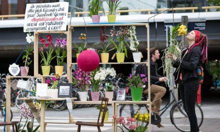 Öffentliches Orchideen-Wohnzimmer in Düsseldorf