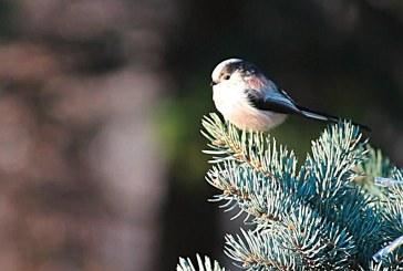 Die Stunde der Wintervögel 2014