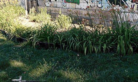Urban Farming: Giftiges Obst und Gemüse?