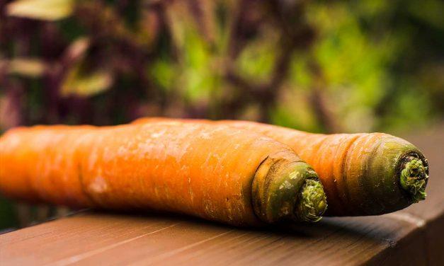 Grüne Karottenköpfe