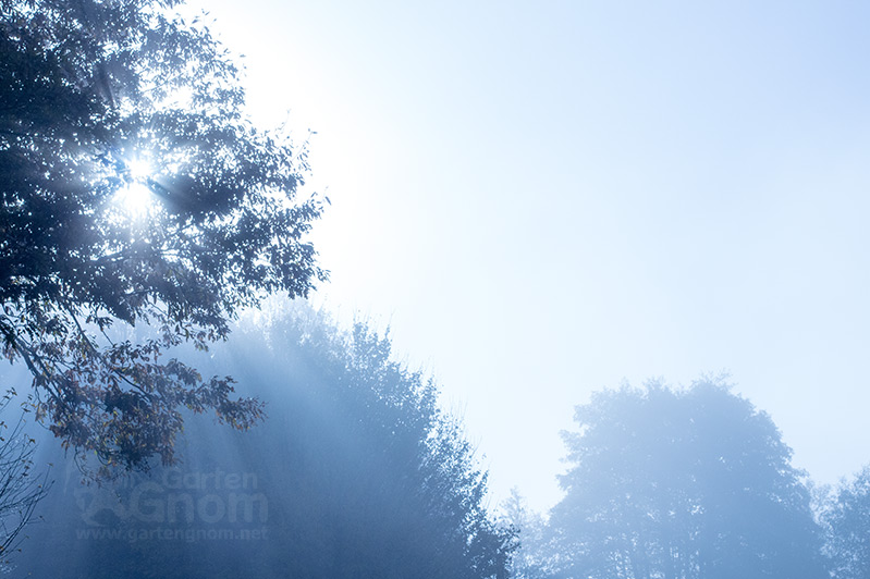 Nebel zwischen Bäumen