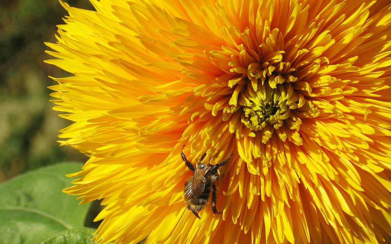 Gefüllte Blüten – wertlose Pracht