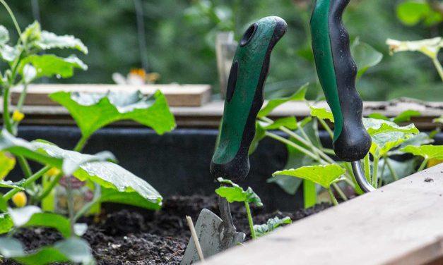 Gartenarbeiten im Juli