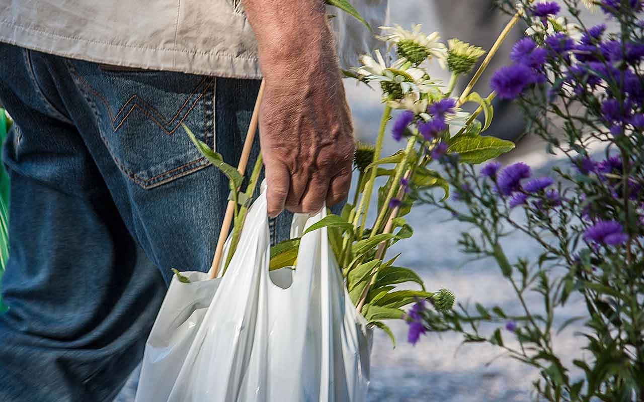 Tipps für den Pflanzenkauf: Was sollte man beachten?