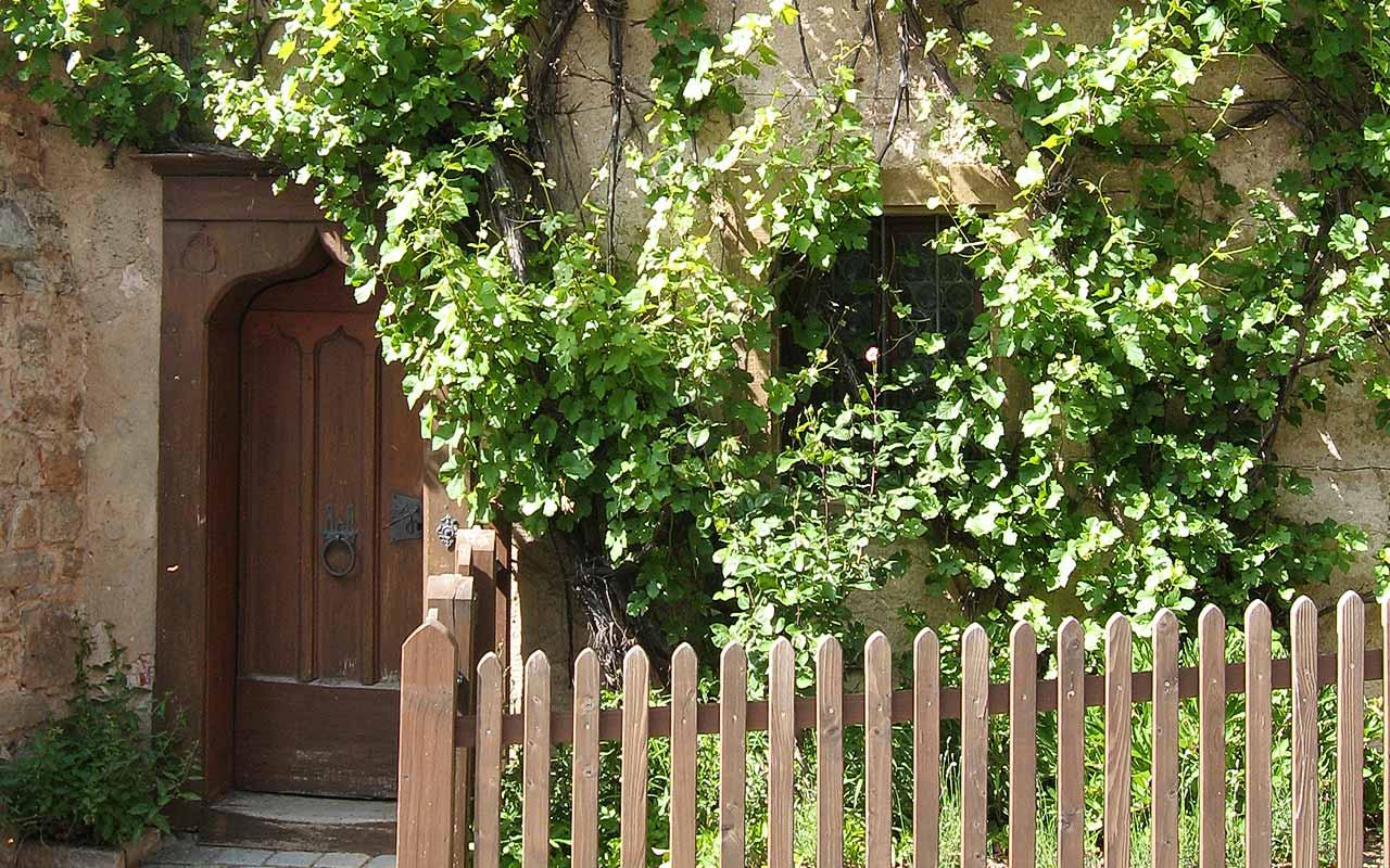 Grune Wande Sichtschutz Und Kletterpflanzen