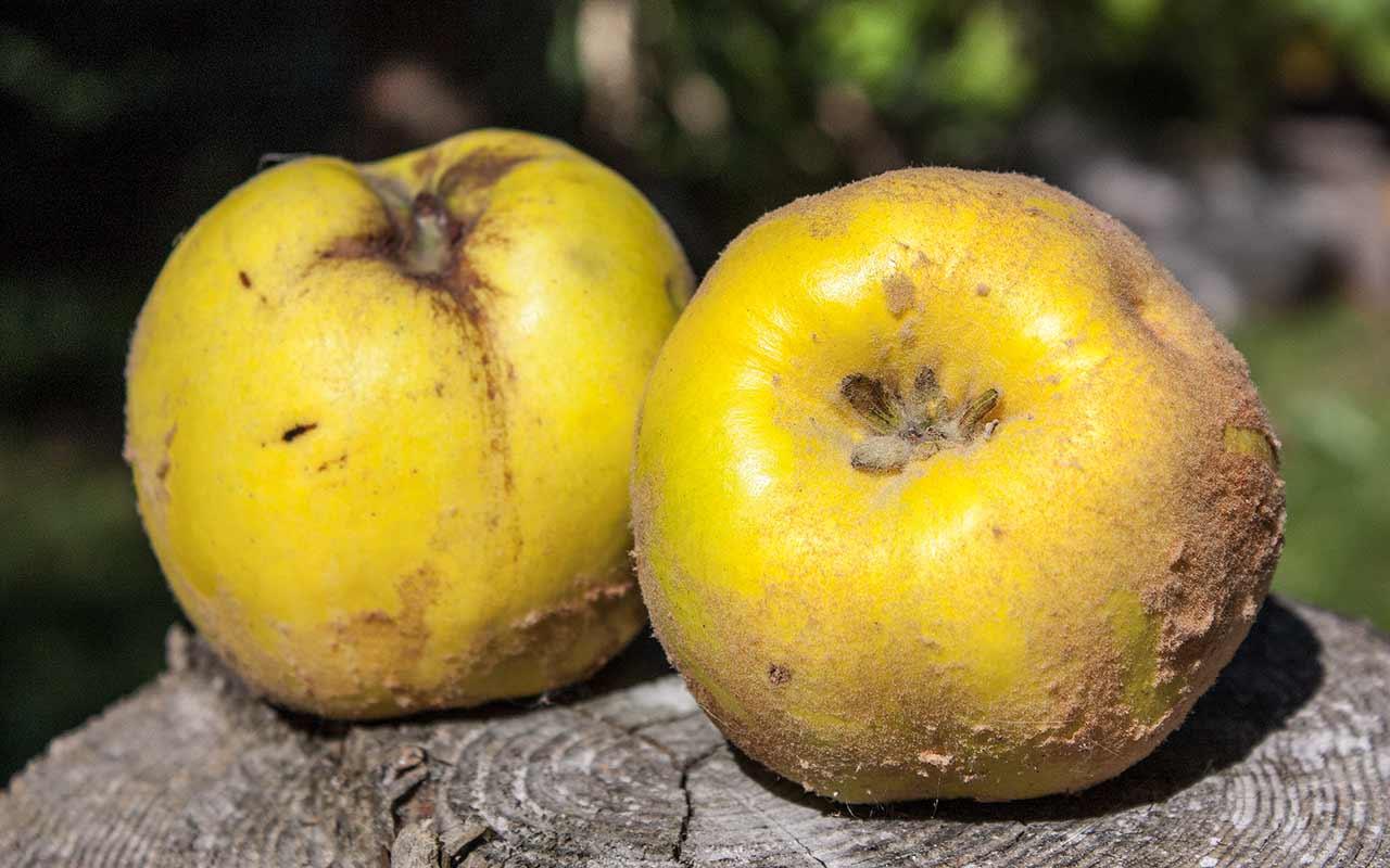 Herbstliche Obsternte Von äpfeln Birnen Quitten Und Mehr
