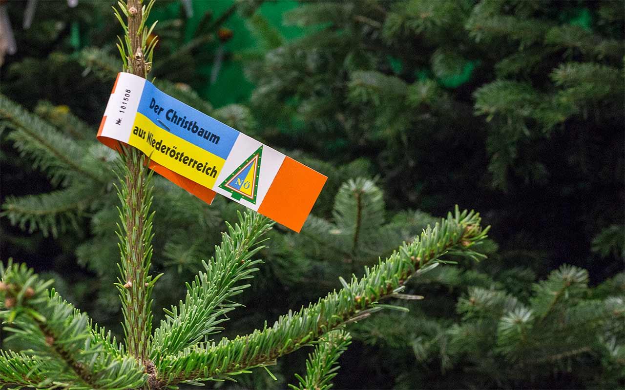 Weihnachtsbaum im topf bio