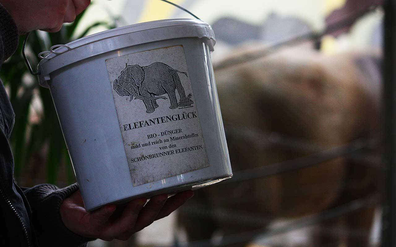 Elefantenglück – Düngen mit Elefantendung