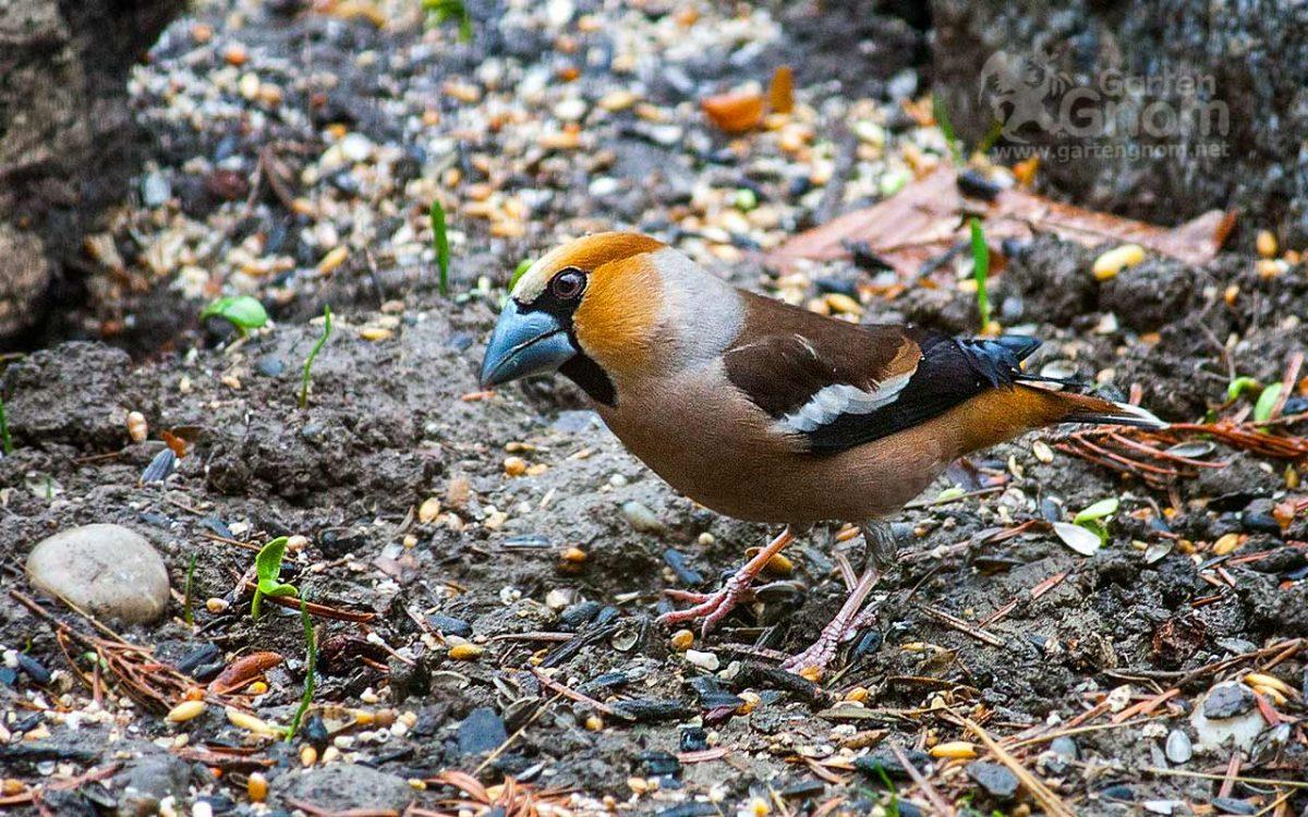 Vogel In Den Garten Locken Der Garten Als Vogelparadies