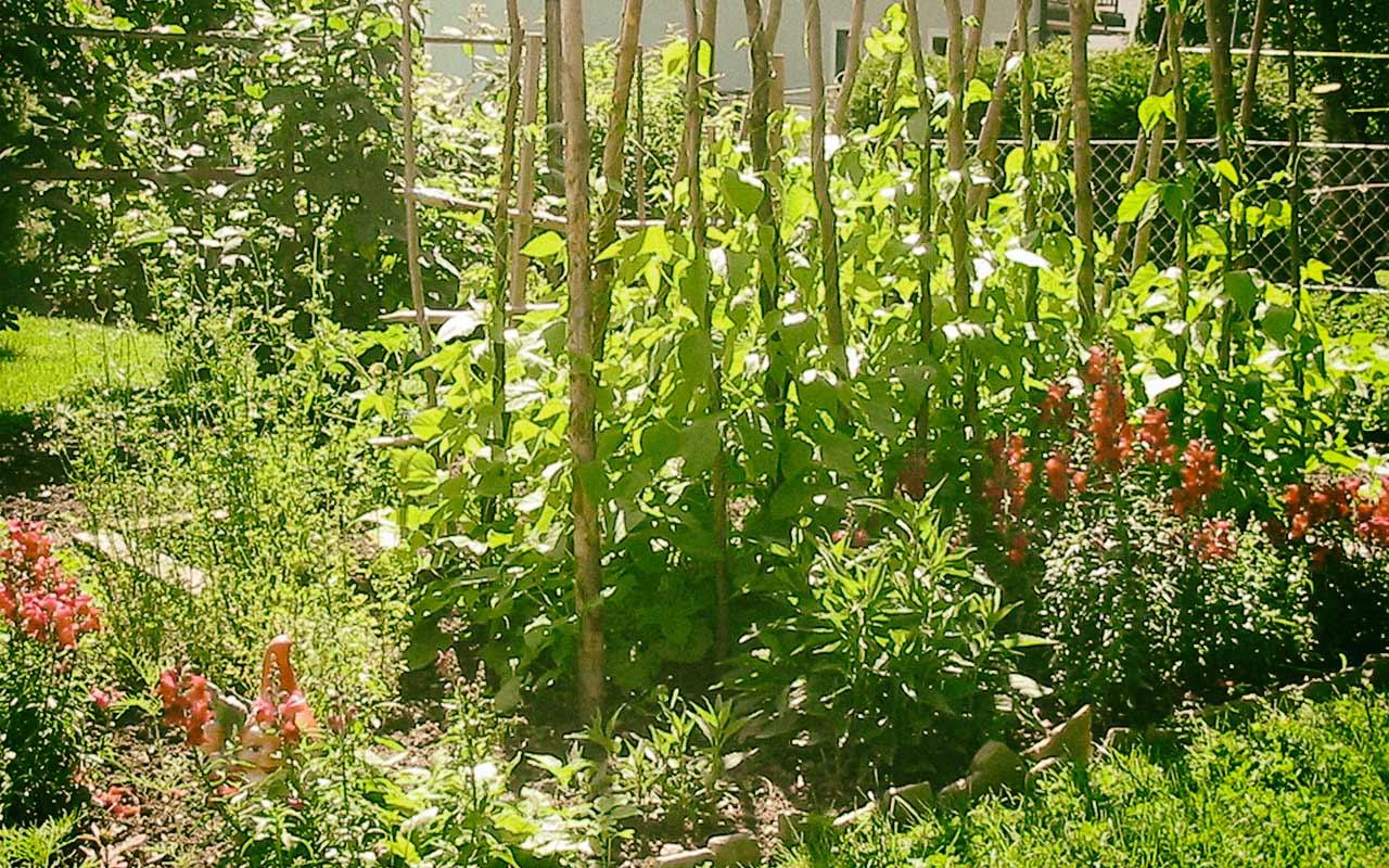 Auf Gute Nachbarschaft Gesunder Garten Durch Mischkulturen