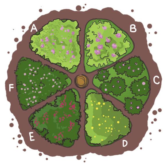 Beet II: A. Kleines Immergrün, B. Storchschnabel, C. Lungenkraut, D. Waldsteinie, E. Lavendelheide, F. Elfenblume