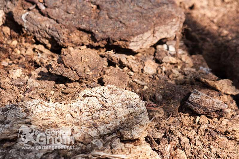 Handgestochene Torfziegel aus dem Moor.