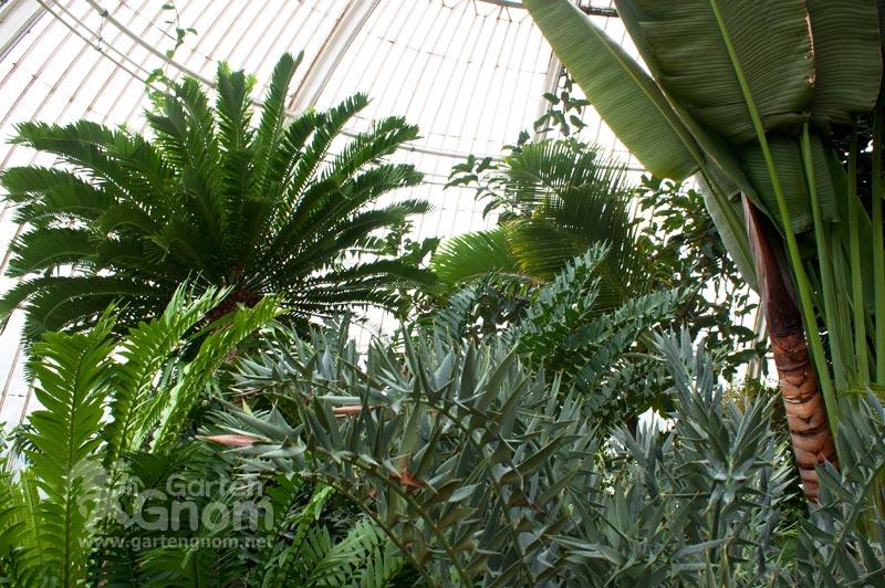 Im großen Palmenhaus in den Kew Gardens in London.